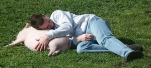 Sieste avec un cochon nain. Cochon nain, cochon vietnamien, mini cochon, cochon miniature désignent le meme type de cochon ! Attention aux arnaques ! - association GroinGroin