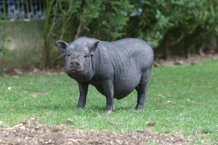 Site de rencontre cochon