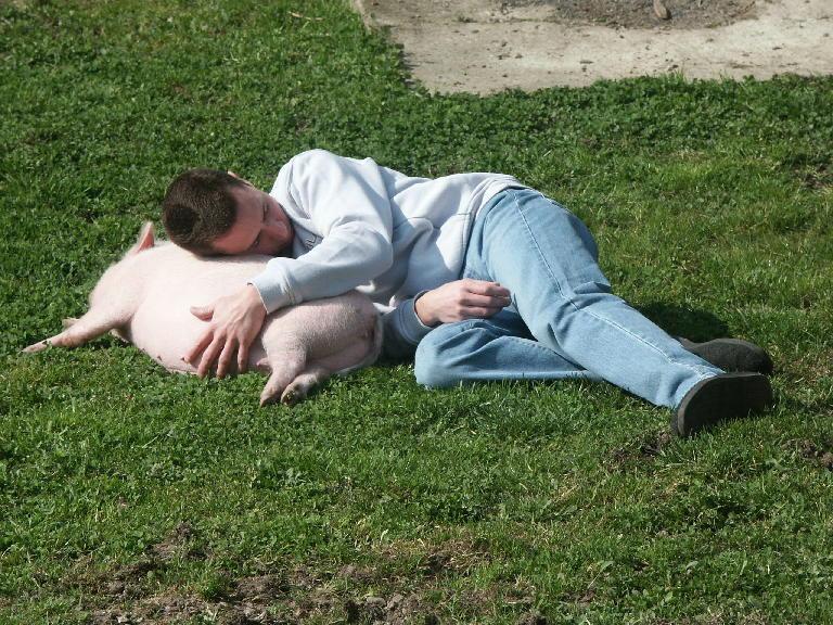 Guide de poche du cochon nain |